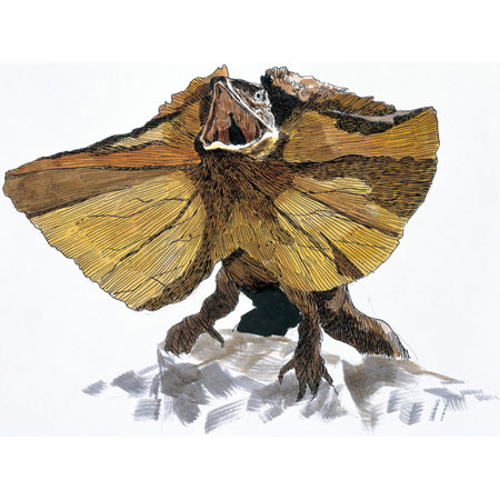エリマキトカゲの画像 p1_14